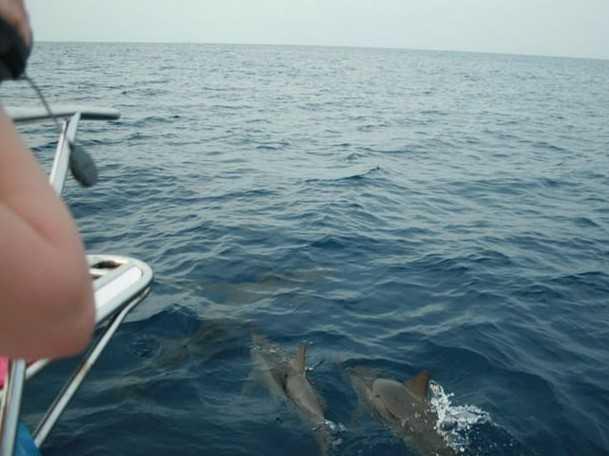 攻略推荐 >马尔代夫看海豚  bandos(班多士岛)就有看海豚的节目