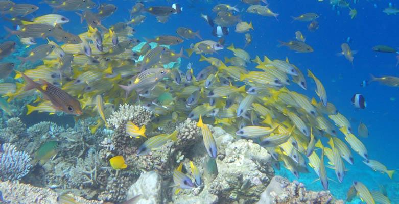 薇拉瓦鲁岛坐落在原始的妮兰朵南环礁上,又名海龟岛、AV岛,属于Angsana集团,而Angsana集团又是悦榕庄下面的一个品牌,这里有透明教堂的,主岛全为沙屋,水屋在离岛大约200米处。它远离尘嚣,四周环绕着棕榈树,黄金海岸以及清澈而又透明的蓝绿色湖水。您可以想象,当轻柔的海风吹过身旁,色彩斑斓的鱼儿在珊瑚海里自由穿行,那是多美的画面啊!岛上植物种类繁多。。这里植物种类繁多,岛的四周环绕着棕榈树、黄金海岸以及清澈而又透明的蓝绿色海水,岛上的度假村拥有79间别墅,每一间的设计都仿佛无穷无尽的臆想空间。
