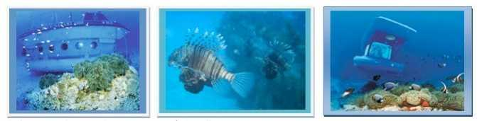 活动    :深海钓鱼