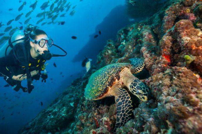 马尔代夫大公园岛潜水