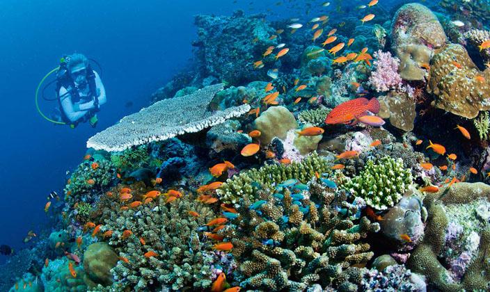 维拉私人岛岛屿简介 维拉私人岛与2013年12月正式对外营业,岛屿呈椭圆形的小岛,占地面积16公顷。正如岛屿的名字一样,在众多的私人岛屿中,维拉私人岛是极少数真正私有的岛。维拉私人岛为客人提供一个真正的隐私空间,运用灵活的时间,享受一流的服务。毕竟,Jiri花了太多的时间和精力在岛屿设计上,并希望自己能一直享受这种美妙的感觉,而不仅仅是一个星期或两个。当您登上维拉私人岛的那时起,就仿佛置身于一个世外桃源红,与世隔绝,让人心旷神怡。在这里您将体验到前所未有的度假享受,生态时尚的豪华别墅、味道可口的国际美食、