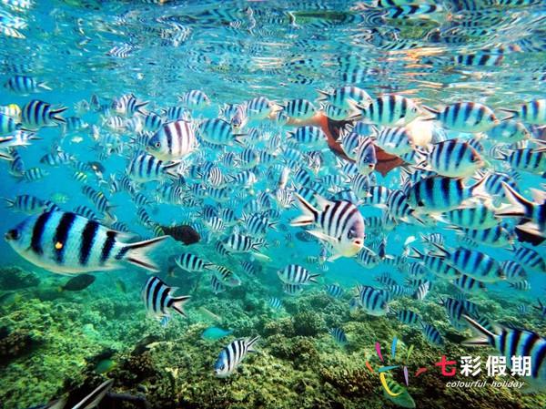 斐济极乐点浮潜
