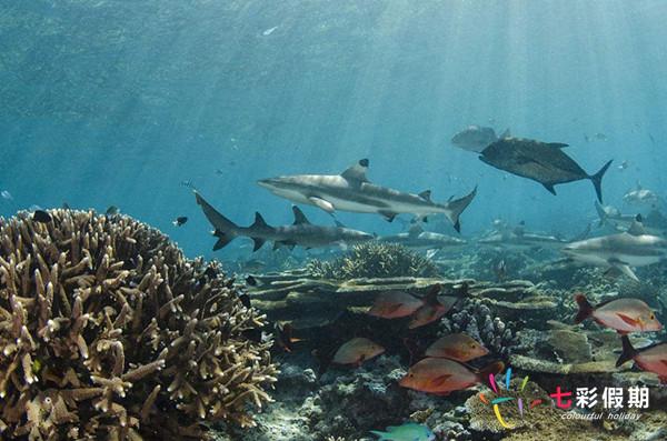 斐济鲨鱼浮潜