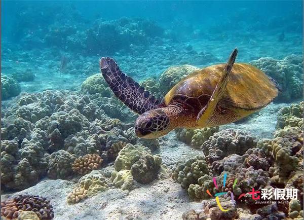 杰瑞果冻珊瑚礁
