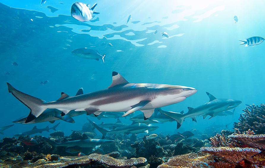 壁纸 海底 海底世界 海洋馆 水族馆 桌面 893_565