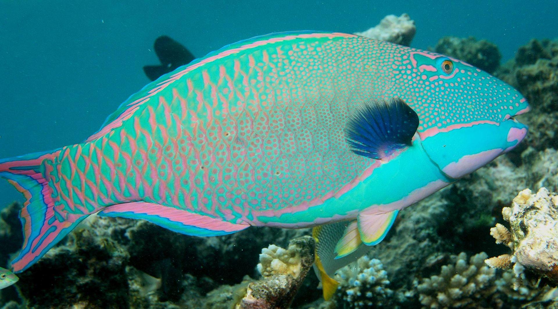 壁纸 动物 海底 海底世界 海洋馆 水族馆 鱼 鱼类 1920_1064