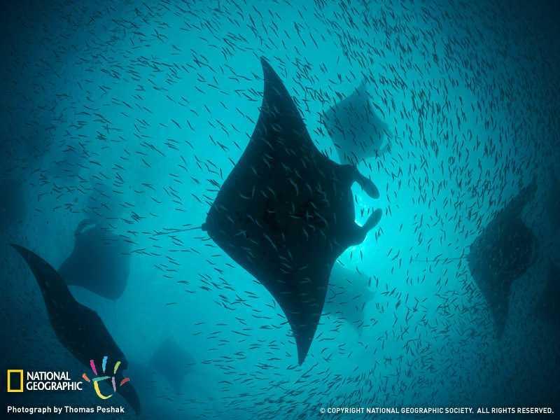 壁纸 动物 海底 海底世界 海洋馆 水族馆 鱼 鱼类 800_600
